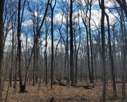 Trees at Huntley Meadows in winter