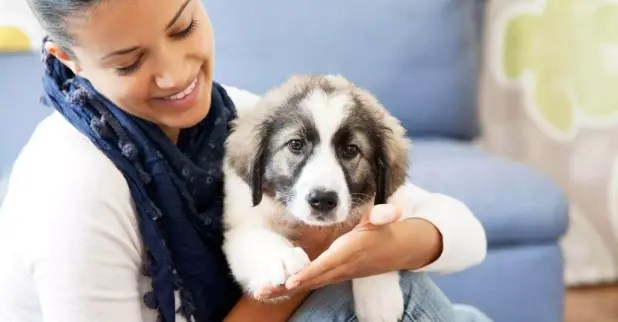 Animal Care Cover Letter Sample – Worker, Attendant, Technician