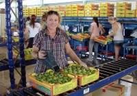 Fruit Packer Resume Banner