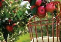 Fruit Picker Cover Letter Banner