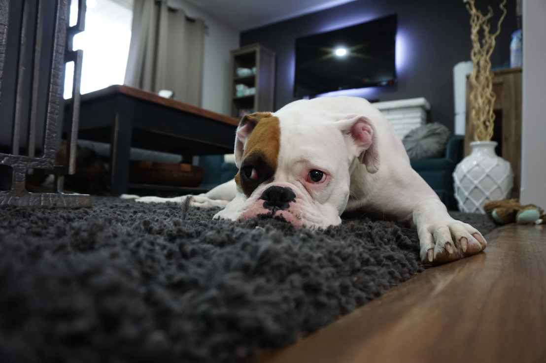 The CDC provides information on how to best protect your pets during the COVID-19 pandemic