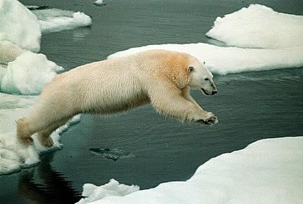 El Ártico emergente: Rivalidad o cooperación  – Por José Miguel De Sousa Costa