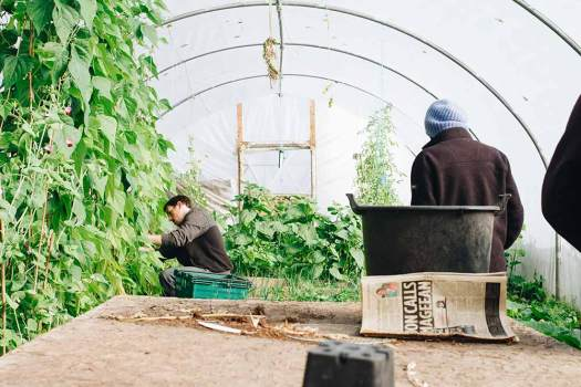 winter greenhouse cold weather agriculture
