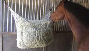 Cowgirl- Slow-feeder