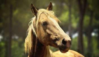Cowgirl - Horseback Rider