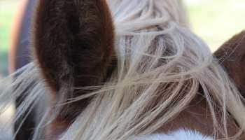 Cowgirl - Dandruff