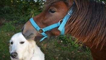 Cowgirl - Dog