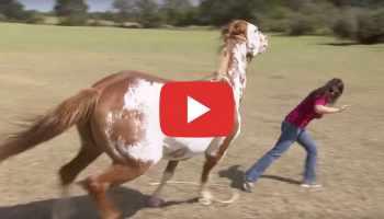 clinton anderson bitten cowgirl magazine