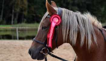 """Cowgirl Magazine"" - Horse Show Hacks"