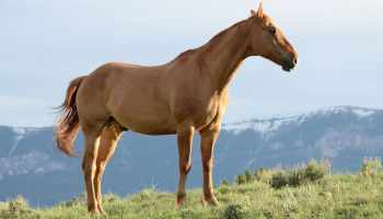 Inspiring Horse