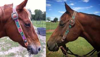 Belt Headstall