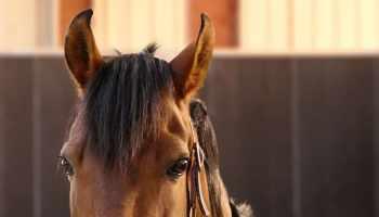 Largest Horse Barn