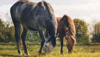 horses grazing in a field cowgirl magazine