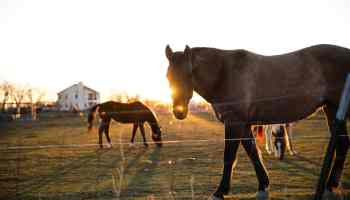 horse hacks cowgirl magazine