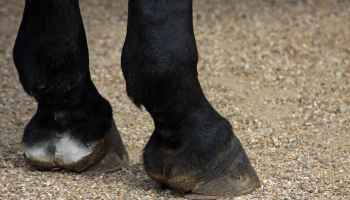 Mistakes Hoof Care