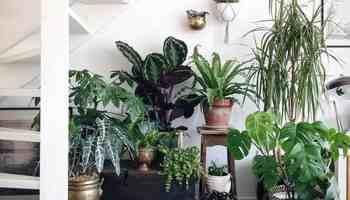 pet friendly house plants Cowgirl Magazine