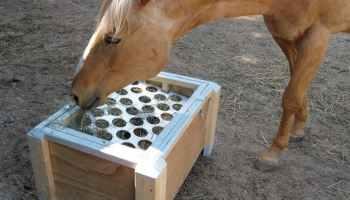 slow feeder cowgirl magazine