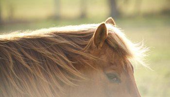 cushing's cowgirl magazine