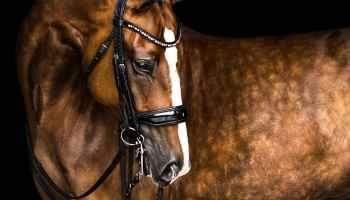 Equine Dapples Cover