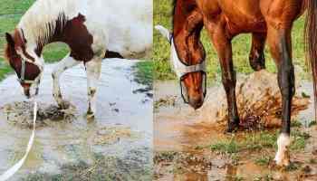mud cowgirl magazine