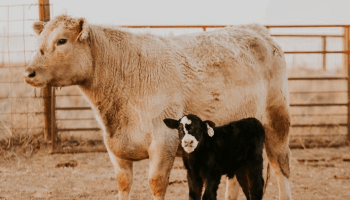 cowgirl-magazine-back-to-school-box