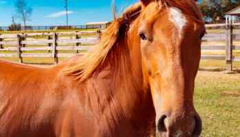 prepurchase cowgirl magazine