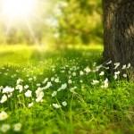 Kraków nie będzie już tracił drzewostanu. Do 2040 r. drzewa mają pokrywać 8 % miasta