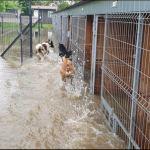 APEL! Ogromna prośba o domy tymczasowe dla psów