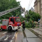 Drzewo przewróciło się na ul. Basztową