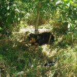 Serce pęka…Ktoś przywiązał suczkę do drzewa i zostawił!