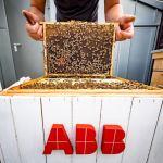 Krakowskie pszczoły pomogą zbudować miasta przyszłości?