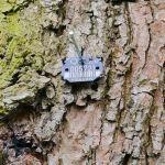 Mała czarna tabliczka na drzewie? Czym jest i co oznacza?