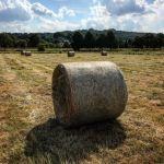 Skoszona na Błoniach trawa trafi na paszę dla owiec. Jest też możliwość zabrania siana dla swoich zwierzaków
