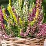 Akcja w Castoramie! Wymień elektrośmieci na kwiaty