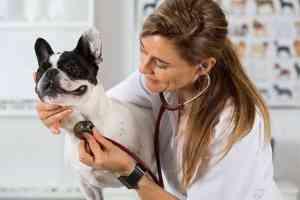 Kaszel kenelowy u psa: dlaczego pies kaszle i jak mu pomóc?
