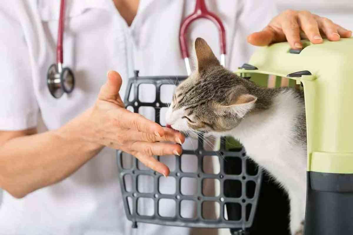 Co zrobić kiedy u kota stwierdzono FIV?