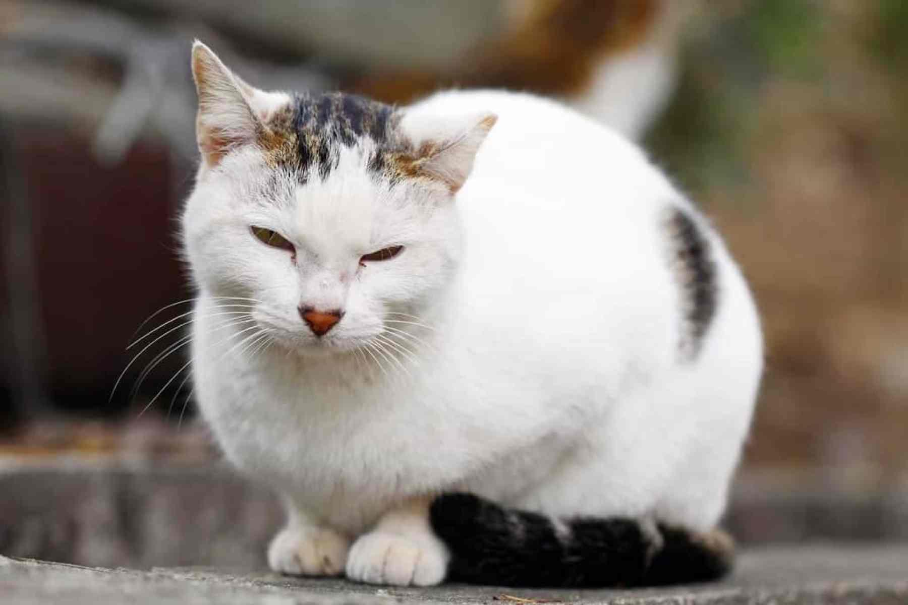 Jak organizm kota może bronić się przed wirusem białaczki