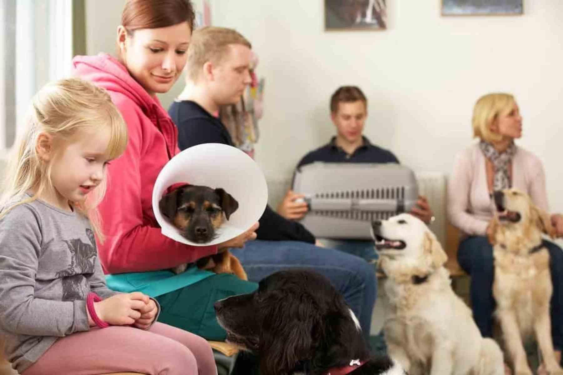 Kastracja sterylizacja psa i kota