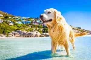 Dirofilarioza u psa i kota: jak rozpoznać i leczyć inwazję Dirofilaria?
