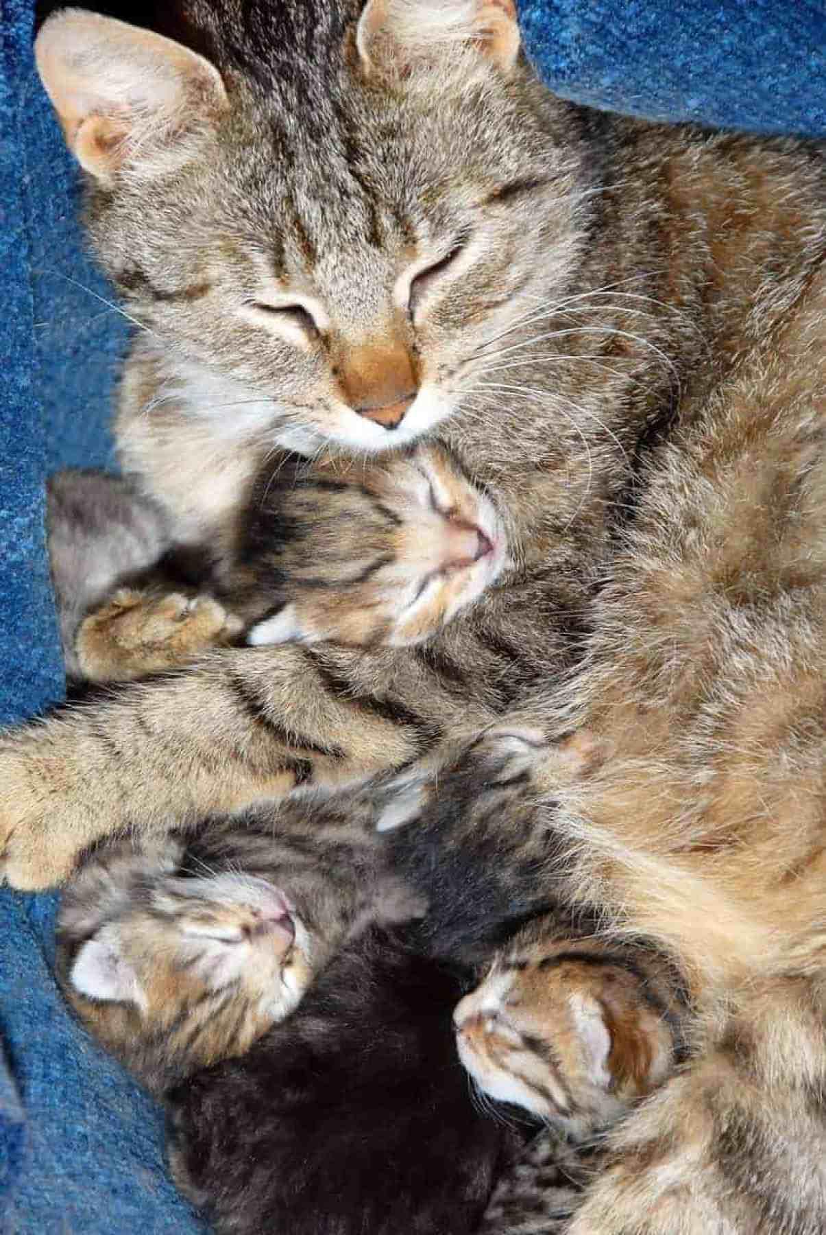 Jak dbać o kotkę po porodzie?
