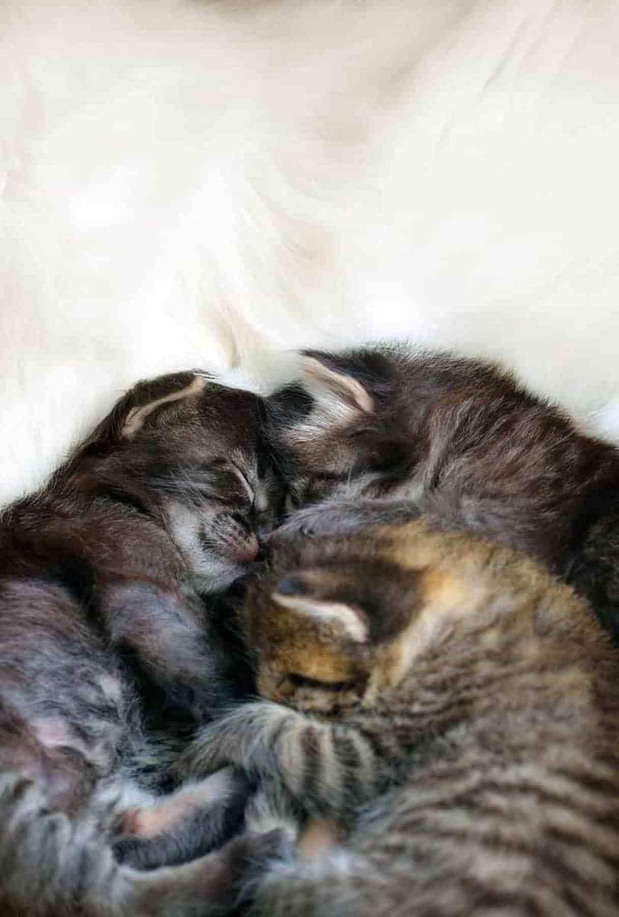 Jakie mogą wystąpić komplikacje przy porodzie u kotki?