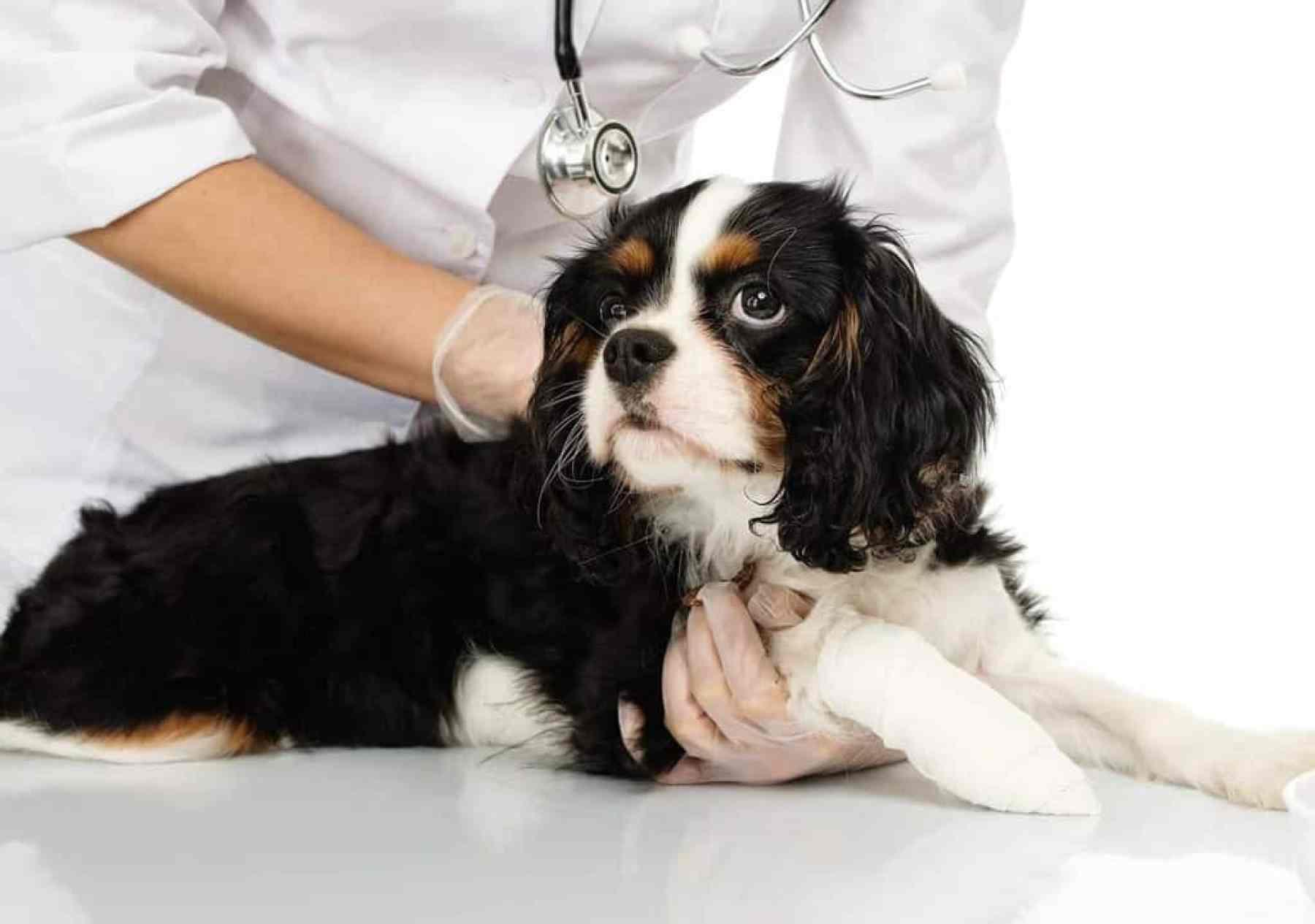 Czy pękające poduszki łap psa to poważny problem?