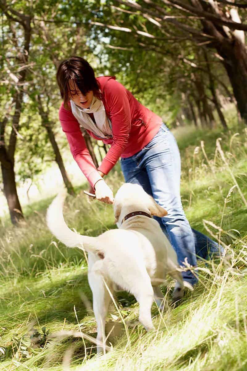 Odpowiednia dawka ruchu, ćwiczenia i fizykoterapia psa