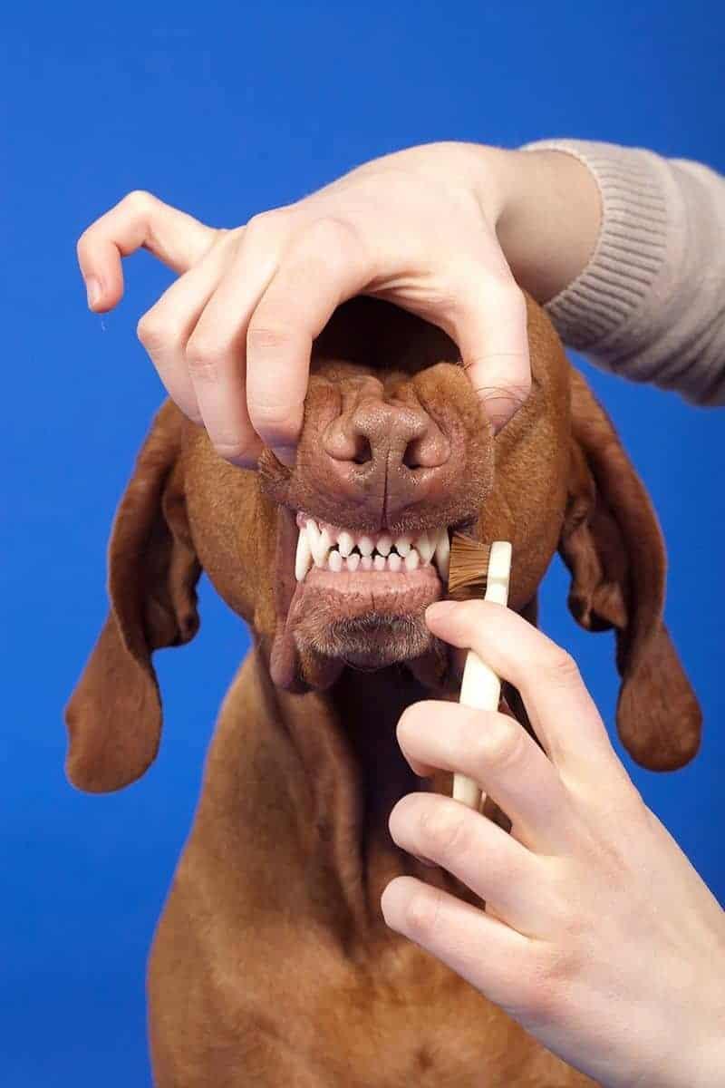 Szczoteczka do zębów dla psa