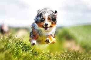 Karma dla psa i kota na stawy: jak karmić przy chorobie zwyrodnieniowej stawów?