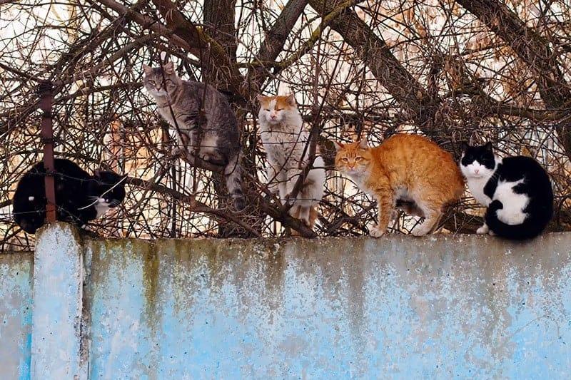 anemia kot wychodzący