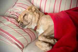 Choroby prostaty u psów: jak je rozpoznać i leczyć?