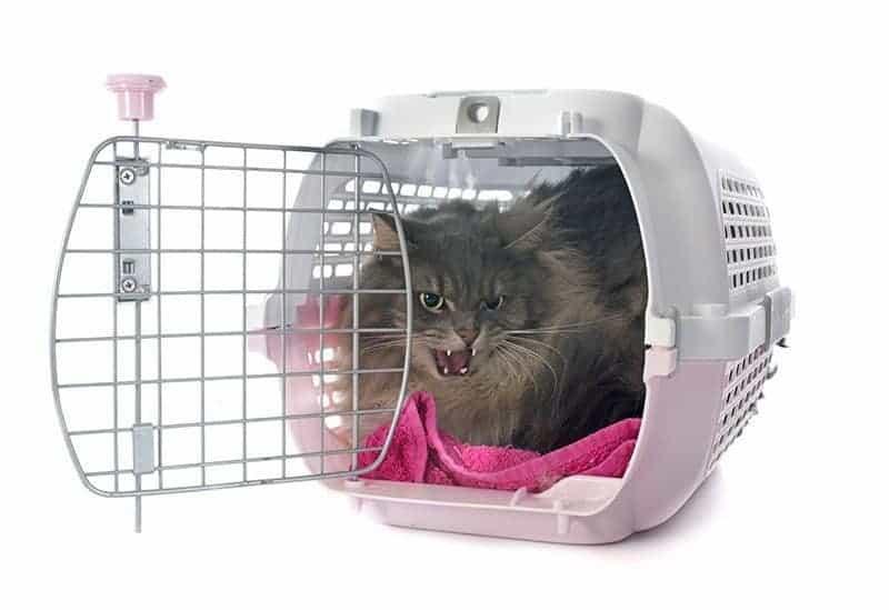 Jakie koty są najbardziej agresywne?