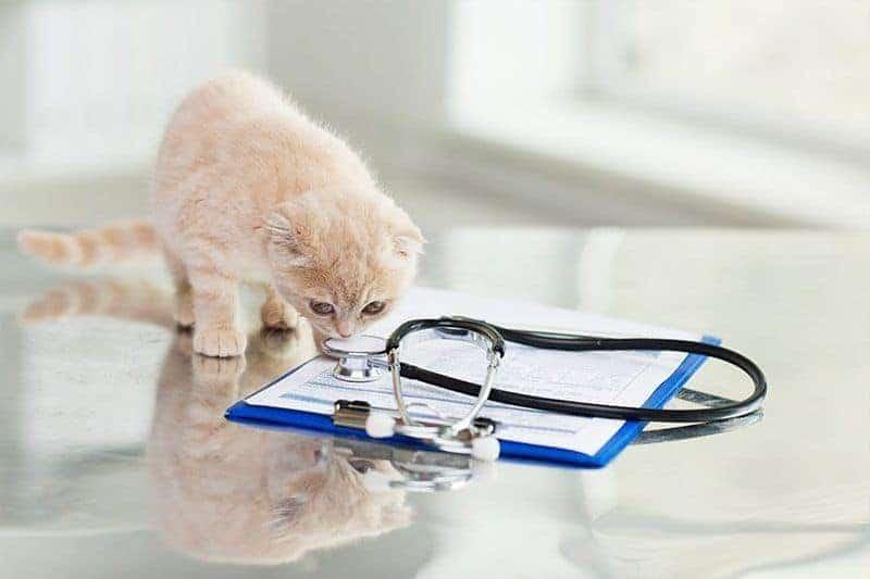 Kardiomiopatia przerostowa u kota leczenie
