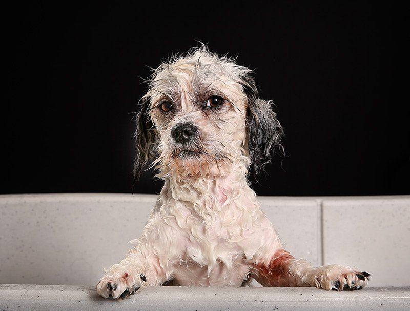 Czy można do kąpieli psa używać ludzkich szamponów?